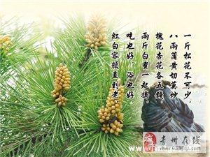 湖南綠大地生物藥業-轉載《美人井傳說》