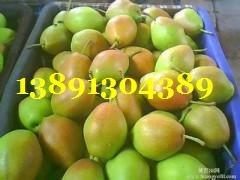 陜西紅香酥梨產地批發大量上市