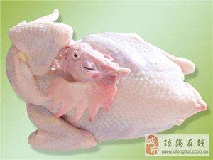 琼海发宝禽类屠宰加工厂代屠宰鸡鸭鹅