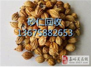砂仁回收多少钱一公斤136-7588-2653