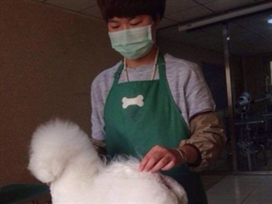 宠物美容培训优缇多格宠物美容课程 - 6000元