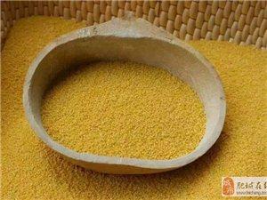 自家山地有机小米,米油多,香味浓。