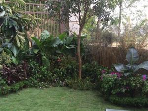 御景园专业花园景观,草坪,防腐木