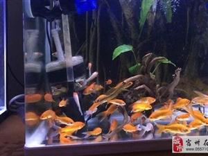鱼缸急售 全新无刮痕可以到某宝去比价格
