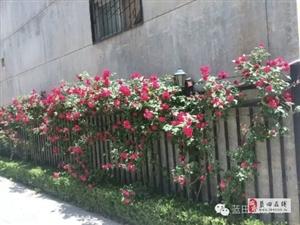 蓝希花园小区2室2厅1卫59.16万元