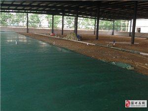 滨州无棣卖绿色金刚砂地面材料公司验收合格率高