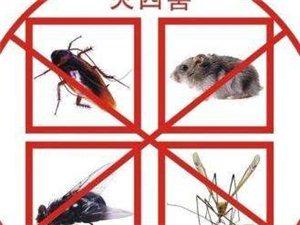专业除四害灭鼠灭蟑灭蚊灭蚂蚁消杀公司