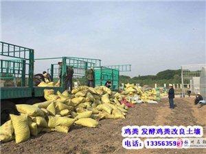 出售梅州雞糞,惠州干雞糞,福建曬干雞糞