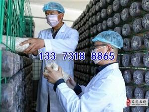 出菇架廠家蘑菇網片養菌架出菇網架