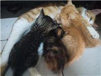 自家小母猫生的小猫  求带走!