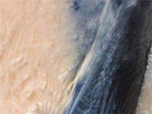平頂山市湛河區專業黑蝙蝠自來水管道漏水檢測