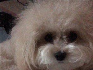 爱犬于前几天在广汇加气站附近不幸走失
