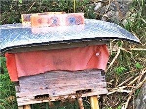 华蓥山土蜂蜜