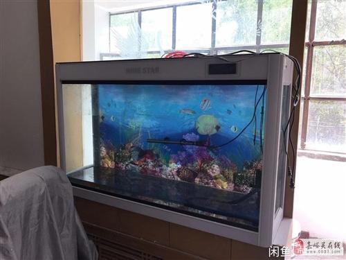 閑置魚缸,低價處理