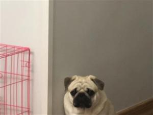 重金寻回爱犬感谢金2000元现金