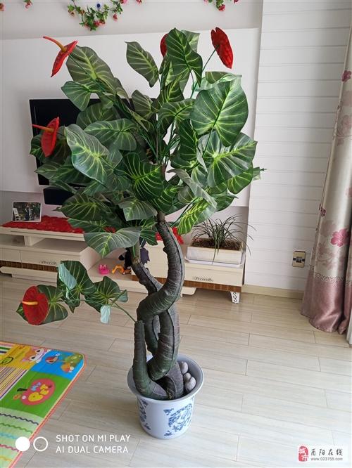 紅掌塑料花、高度1.7米、9成新