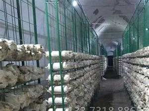 食用菌網格培養架 菌菇網架 食用菌架子網格食用菌網