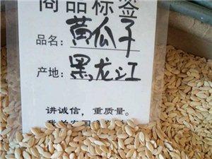 黃瓜籽批發零售
