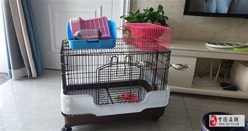 闲置宠物笼