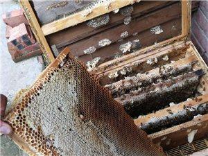 純天然蜂蜜