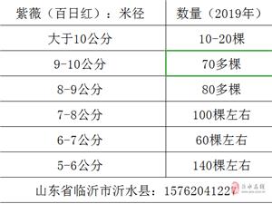 大量出售6-10公分紫薇(百日红)、马褂木