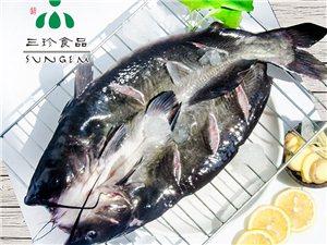 廠家大量出售開背鮰魚冷凍鮰魚冷凍清江魚!烤魚店專供