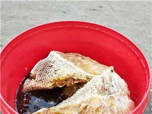正宗蜂蜜,山岭上的蜂蜜,150元一斤