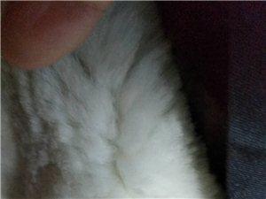 警用保安全新多功能羔羊皮高档正品棉衣(加厚羊羔皮)