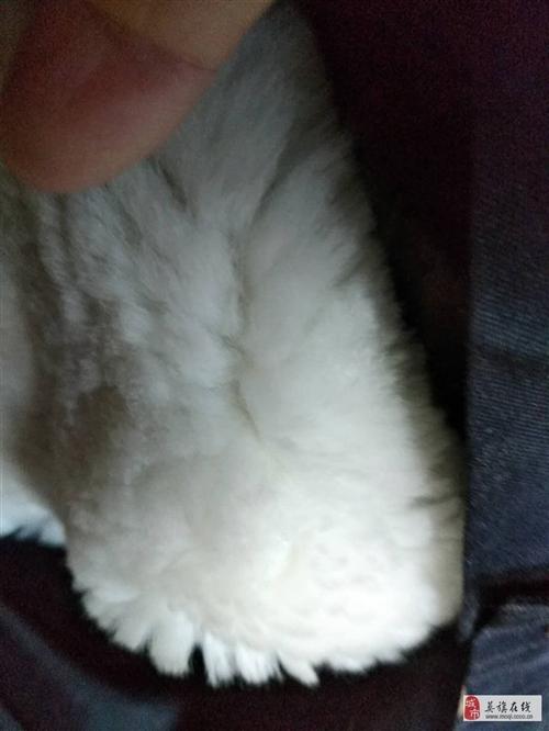 警用保安全新多功能羔羊皮高檔正品棉衣(加厚羊羔皮)