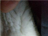 警用保安全新多功能羔羊皮高檔正品棉衣(加厚羊羔皮