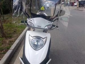 出售新大洲本田摩托�一�v