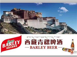 西藏青稞啤酒诚招安徽省市/县级代理