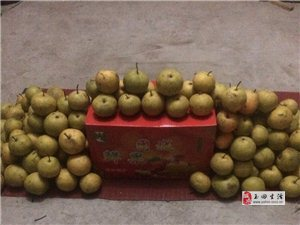 賣團城酸梨一玉田縣孤樹鎮團城酸梨是河北特產。