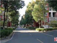神光花园精装大3室便宜出售56.8万元