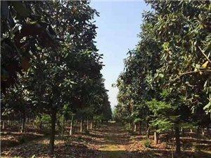 郎溪特美农业开发有限公司专业苗圃、绿化、设计服务