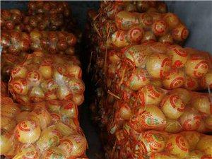 梅州沙田柚1万斤批发寻乌现货 好吃甜