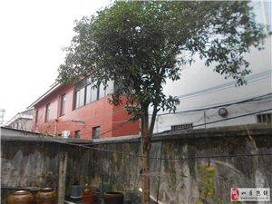 出售20年桂花树(金桂)