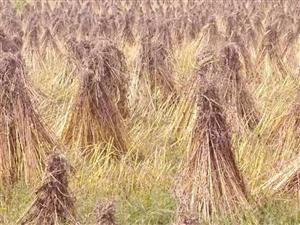 白乌镇新农村有一块面积八十多亩土地承包转让