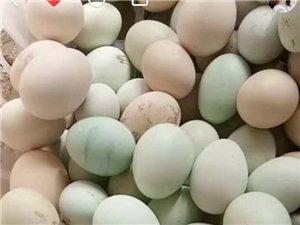疫情期间,半价售卖柴鸡蛋 0.8元/个,送货上门
