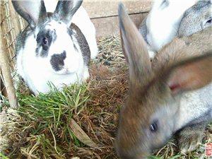 出售:8只兔子,20一只