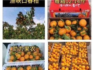 有需要春柑,血橙的可直接下单,城区直接配送到家