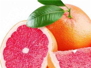 大量江西幾橙苗子出售