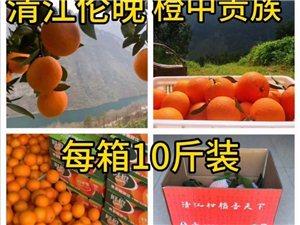 清江伦晚上市,还有少量春柑,血橙,城区直接配送.