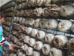 食用菌网架a天津食用菌网架a食用菌网架生产厂家