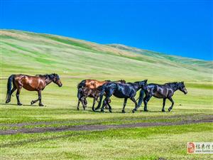 康西草原旅游團接待中心,每人100元,包括食宿、騎馬