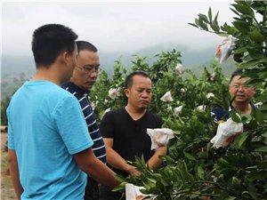州 农业 局 领导 到盘江乡果蔬协会调研
