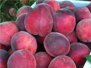 十里桃花源,�R朐�r桃��日直供邀你��L�r,�@可能是你吃�^最好吃的桃子!