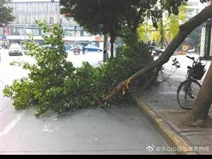 �A江一�T市外的行道��渲�嗔眩�住建局�@林部�T已消除安全�[患