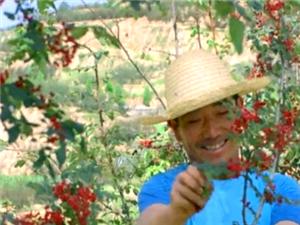 这颗优美的花椒!