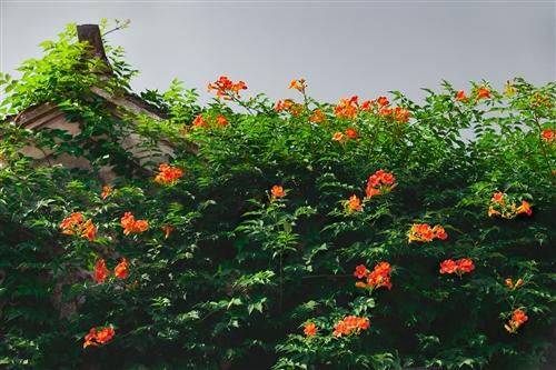 山西翼城:乡村旅游路 沿途皆美景